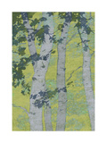 Birch Trees Prints