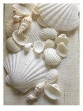 White Sea Shells Photographie