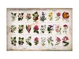 Botânica vintage Posters
