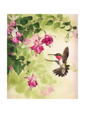 Hummingbird with Flowers Art