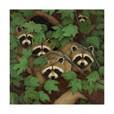 Family of Raccoons Affiches