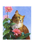 Orange Cat with Zinnia Premium Giclee Print
