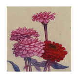 Zinnia Flower Posters