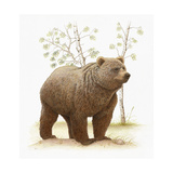 Grizzly Bear on Dirt Mound Poster