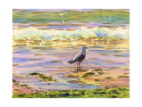 Seagull at Water's Edge Print