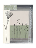 Gray Wildflowers Posters