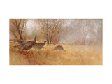 Wild Turkeys Prints