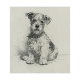 Victorian Terrier Plakaty