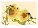 Yellow Birds on Sunflowers Prints