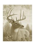 Portrait of Deer Posters