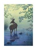 Deer in Stream Print