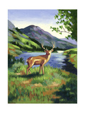 Deer Standing Near a Lake Posters