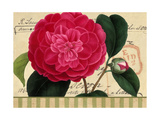 Pink Flower on French Postcard Poster