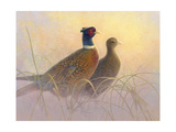 Pheasants Posters