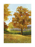 Autumn Tree Prints