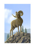 Ram on Mountain Top Prints
