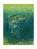 Close Up of Fish Premium Giclee Print