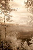 Peaceful Morning I Prints by Monte Nagler