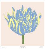 Soho Tulip I Print by Zachary Alexander