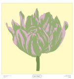Soho Tulip IV Prints by Zachary Alexander