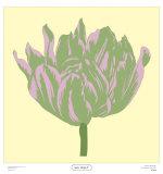 Soho Tulip IV Prints by Zachary Alexander