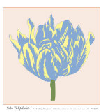 Soho Tulip Petite I Posters by Zachary Alexander