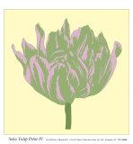 Soho Tulip Petite IV Art by Zachary Alexander