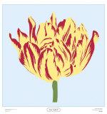 Soho Tulip II Prints by Zachary Alexander