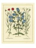 Besler Floral IV Poster by Besler Basilius