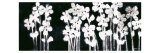 White Flowers on Black I Lámina por Norman Wyatt Jr.