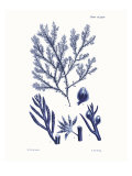 Shades of Indigo IV Giclee Print by Vision Studio 