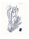 Shades of Indigo III Giclee Print by Vision Studio 