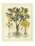 Besler Floral II Posters by Besler Basilius