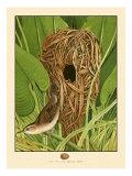 Long-Billed Marsh Wren Art
