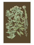 Organic Greenery I Kunstdrucke von Johann Wilhelm Weinmann