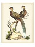 Regal Pheasants II Reproduction procédé giclée par George Edwards