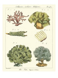 Coral Classification II Giclee Print by Vision Studio 