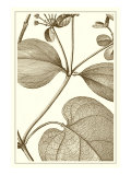 Cropped Sepia Botanical V Reproduction procédé giclée par Vision Studio