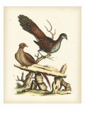 Regal Pheasants I Giclee Print by George Edwards