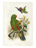 Gould: Papageien I Kunstdrucke von John Gould