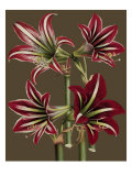 Lush Amaryllis I Gicl&#233;e-Druck von Van Houtt 