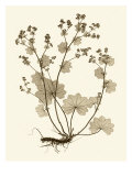 Sepia Nature Study I Giclee Print by Vision Studio 