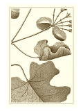 Cropped Sepia Botanical I Poster von  Vision Studio