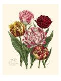 Burst of Spring II Posters af Vision Studio