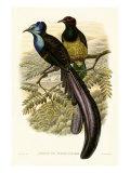 Gould, Oiseau de paradis I Reproduction procédé giclée par John Gould