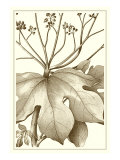 Cropped Sepia Botanical VI Kunstdrucke von  Vision Studio