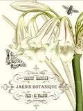 Jardin Botanique I Giclee Print by  Vision Studio