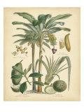 Fruitful Palm II Art