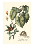 Imperial Foliage III Prints