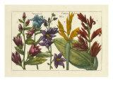 Botanical III Posters